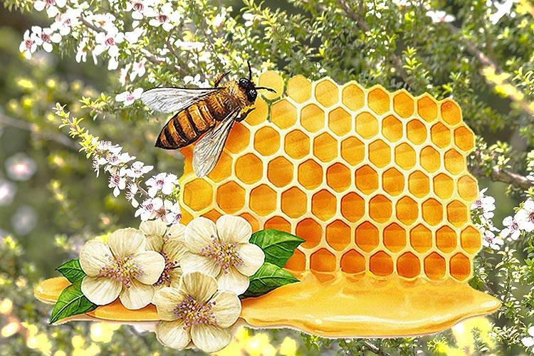 Die heilenden und schmerzlindernden Wirkungen von Manuka-Honig